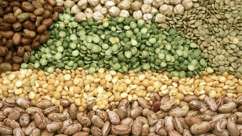 Benefits of Beans for Peripheral Vascular Disease